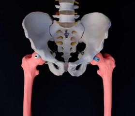Femoral Bone