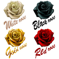 set  flowers roses. red black white gold. inscription emblem.logo