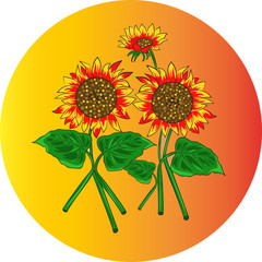 vector illustration of a sunflowers' set