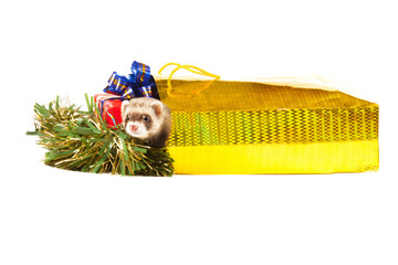 Wall Mural - young ferret wiht Christmas gift