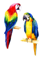 Watercolor illustration of two parrots