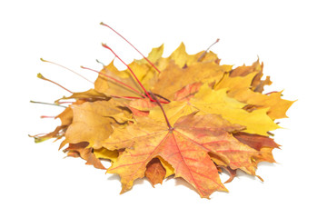 Orange and yellow autumn maple leafs isolated on white background