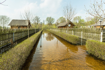 Spring flood, Belarus, near Brest