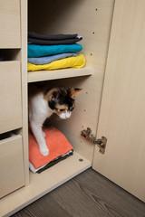 Kätzchen im Schrank