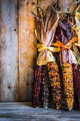 Multicolored indian corn on rustic wooden background