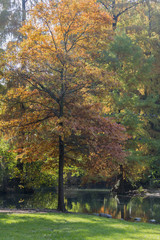 tree in the park in autumn