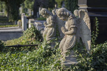 Praying angel statues in cemetery standing over graves covered with ivy