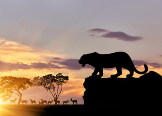 Wall Murals Panther Silhouette of a cheetah on the hunt