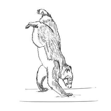 doodle circus bear