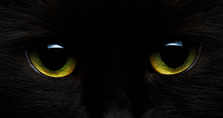 Yellow-green eyes of a black cat close-up