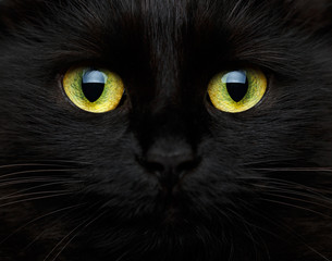 Cute muzzle of a black cat