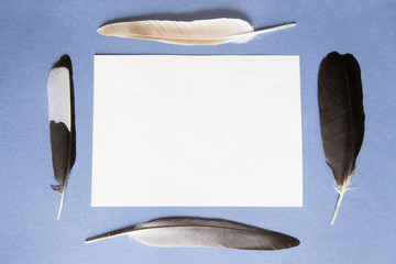 Feathers and a sheet of paper