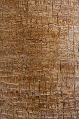 eine Nahaufnahme vom Stamm einer Palme