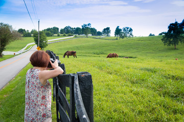 Female photographer taking picture of country landscape with hor