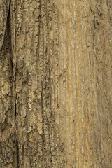 Bark of Old Tree vertical Texture