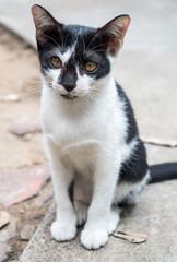Little cute kitten sit on outdoor floor