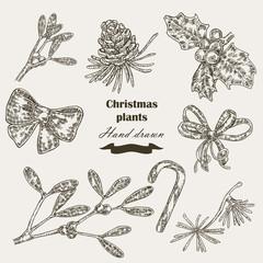 Hand drawn Christmas plants mistletoe and holly.