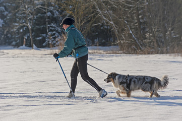 Skilanglauf mit Hund