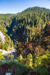 steep cliff over natural Cetatile cave sculpted by river in romanian mountains with conifer forest
