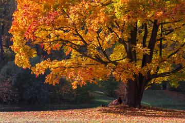 Spoed Foto op Canvas Baksteen Herbst