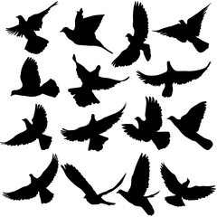 Concept love or peace. Set of silhouettes doves. Vector
