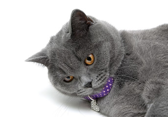 cat with yellow eyes on a white background