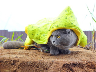 cat ready for the winter