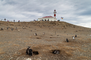 Magellan penguin colony on Isla Magdalena island, Chile