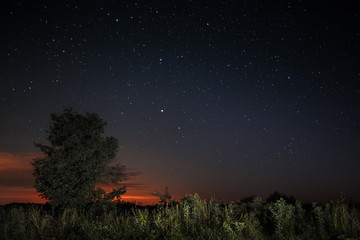 Tree and starry sky