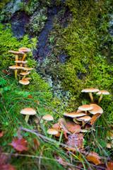 funghi nel bosco autunnale