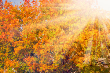 Falls Colors Autumn background