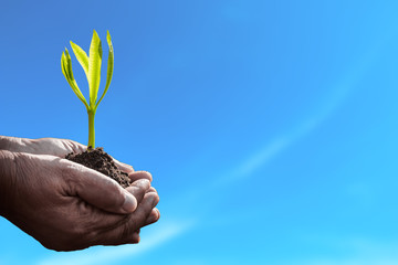 Old human hand holding plant on blue background