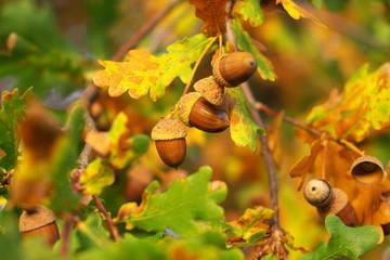 Schön ist der Herbst 2015