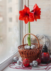 Red Hippeastrum on the winter window