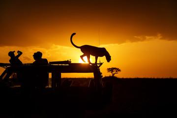 Cheetah on top of car at sunset