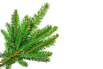 Christmas tree branches isolated on white background