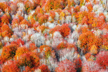 Wall Mural - background of autumnal trees textures