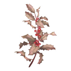 Holly watercolor branch with berries
