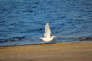 Fotoväggar - Möwe am Strand,