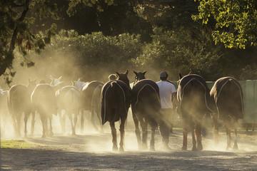 Fototapeta caballo equino deporte
