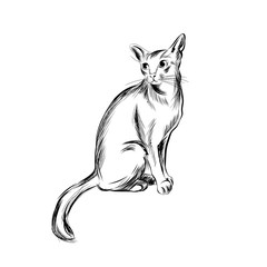 Cat sketch, Hand drawn vector illustration