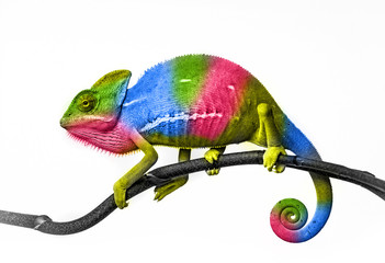 Wall Mural -  chameleon - colors