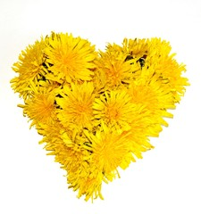Heart made from yellow dandelion flowers