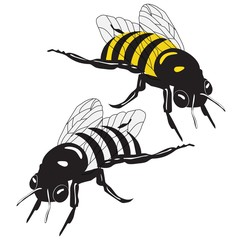 BEE illustration vector