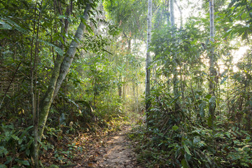 Jungle pathway in morning light