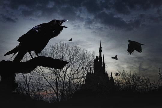 crow, dawn, castle