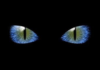 Mysterious grim blue eyes of black cat or ninja