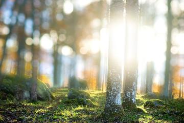 Fototapeten Wald Magic forest