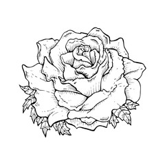 line drawing cartoon  rose