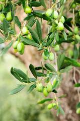 Olive Gargano Italia Olio